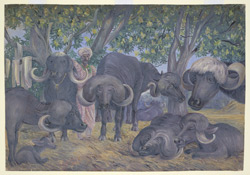 'Buffalos of Bhownuggar.  Kattiwah.  India.  Febr. 1879'